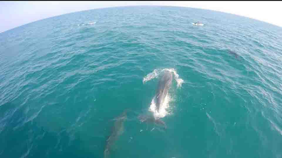 Un bagno con i delfini si pu fare in molise il colibr - Varicella si puo fare il bagno ...
