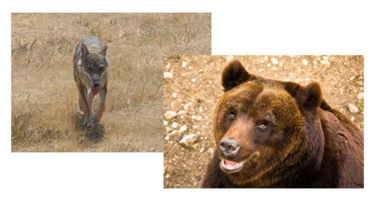 A pasqua balla con i lupi e con gli orsi