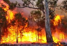Patrimonio forestale e rischio incendi, bando della Regione