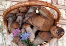 Raccolta e commercializzazione funghi, novità nella legge regionale