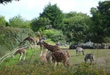 Una visita allo zoo. Ecco i più belli in Italia