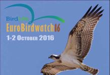 Occhi in su con EuroBirdwatch 2016 sul lago di Guardialfiera