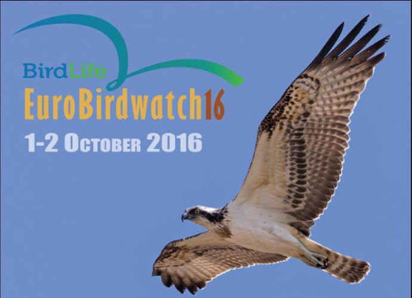Occhi in su con EuroBirdwatch 2016 sul lago di Guardialfiera