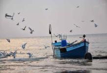 Un milione di euro per pesca e acquacoltura in Molise, l'avviso pubblico