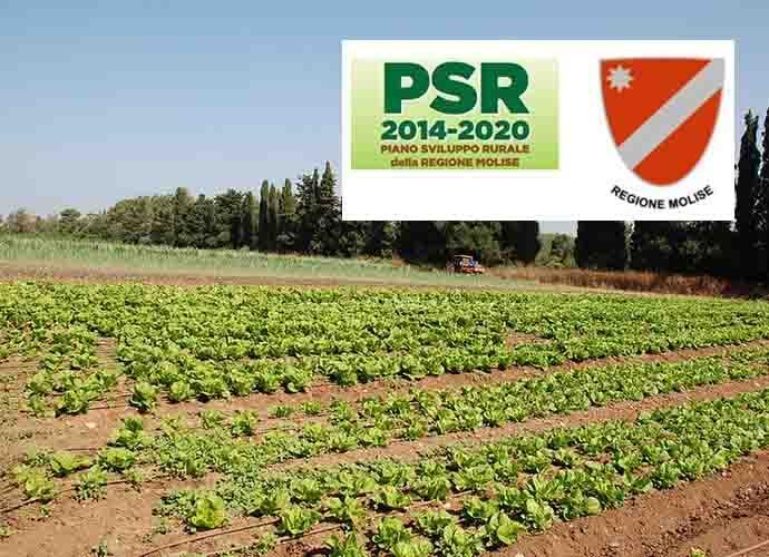 Piano di Sviluppo Locale, prorogato il bando regionale