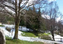 giardino flora appeninica