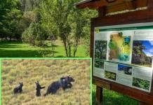 Parco Nazionale Abruzzo evid