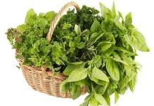 piante spontanee