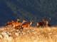 cervi Parco Nazionale