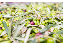 olive molisane