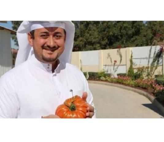 pomodoro qatar