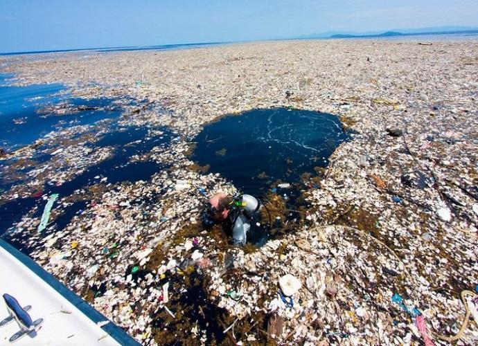 Allarme l 39 isola di plastica nel pacifico sempre pi - Foto di animali dell oceano ...